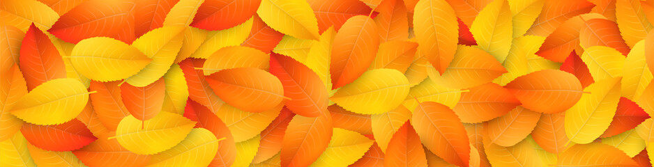 Vector horizontally seamless border with realistic colored fall leaves. Seasonal template with falling foliage for design of website headers and placards. Autumn background for flyers and banners.