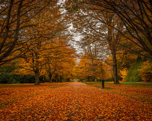 Autumn in the park, Invercargill, New Zealand