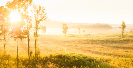 Glowing sunrise shines onto the mist and golden grassland.