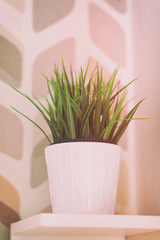A small green plant on the white shelf. Interior image