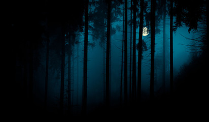 Full moon through the spruce trees in magic mystery night foggy forest. Halloween backdrop.