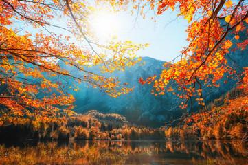 Jesieni drzewa na brzeg Hinterer Langbathsee jezioro w Alps górach, Austria. Piękny krajobraz jesień