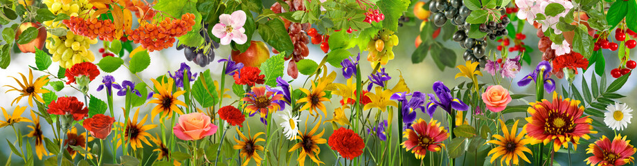 image of beautiful flowers in the garden in summer