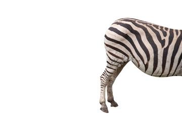 The butt of zebra in isolation