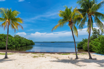 Coco palms on Sunny beach and Caribbean sea in Key, Largo, Florida.