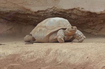 Rabat Zoo animals