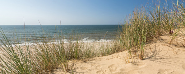 Panorama shot of beach grass in dune landscape with beach and ocean in the background