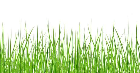 Wiązka odizolowywająca na białym tle zielona trawa