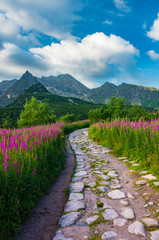 Mountain landscape, Tatra mountains panorama, Poland colorful flowers and peaks in Gasienicowa valley (Hala Gasienicowa), summer