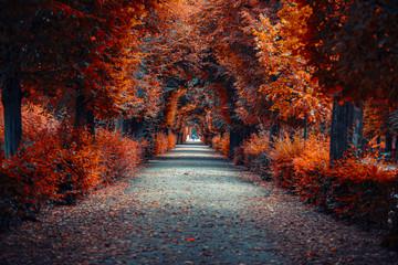 aleja jesień. aleja drzew w parku w czasie jesieni