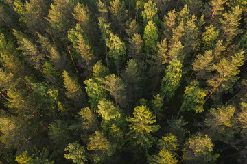 Aerial view of taiga forest at sunset