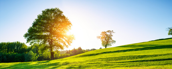 A lonely tree on a green meadow, a vibrant rural landscape with blue sky
