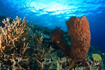 Pristine Scuba Diving at Tukang Besi/Wakatobi Archilpelago Marine Preserve, South Sulawesi, Indonesia, S.E. Asia