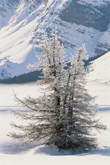 Canada, Banff National Park, Crowfoot Mountain, Canadian Rockies, Frost covered trees