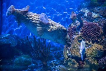 acuario colorido con peces de colores y luces luminosas, aletas y ojos saltones que destacan en el agua
