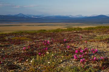 Sub-arctic Tundra Landscape
