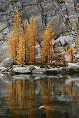 Washington, The Enchantments, Golden larch trees reflected in Talisman Lake