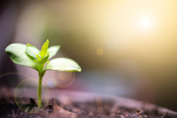 Green sprout growing with morning sunlight. Ecology and Environment concept.