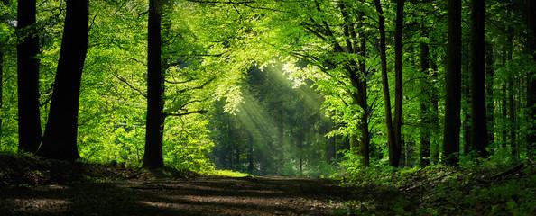 Naturalny łuk ukształtowany przez gałęzie w lesie