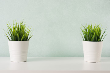 Succulents in white diy concrete pot. Scandinavian room interior decoration