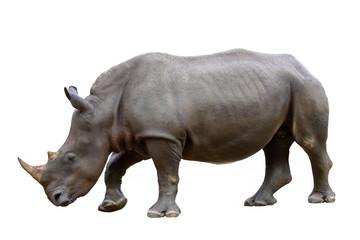 Rhinoceros isolated on white background.
