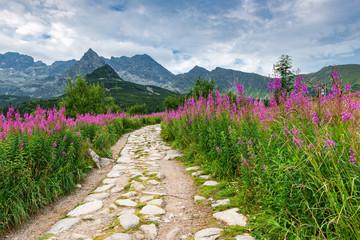 Beautiful Summer Scene at Gasienicowa Valley, Poland