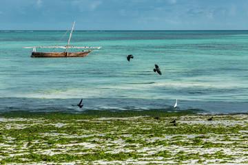 Birds flying over seaweed