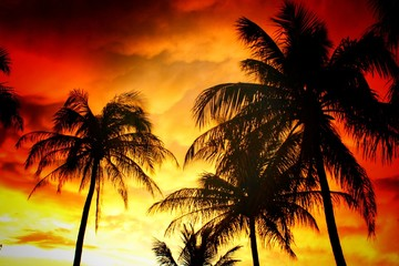 coconut trees in beautiful evening sky