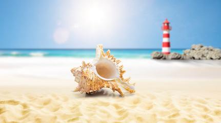 Muschel am strand mit Leuchtturm