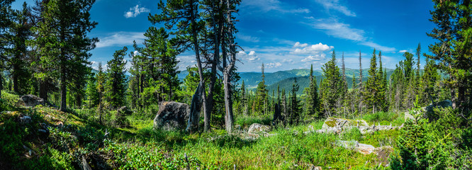 Panoramic sunny summer view in taiga forest over sayan mountains, Ergaki national park, Krasnoyarsk region, Siberia, Russia