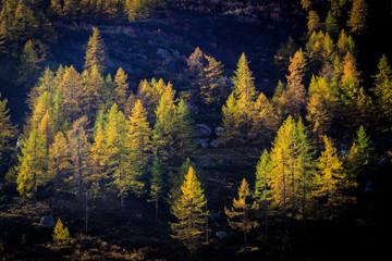 autunno nel parco nazionale del Gran Paradiso