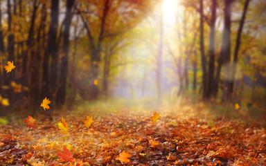 Piękny jesień krajobraz z żółtymi drzewami i słońcem. Kolorowe liście w parku. Spadające liście naturalnego tła. Koncepcja sezon jesień