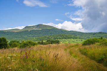 Tarnica, najwyższy szczyt w Polskich Bieszczadach, kwiecista łąka