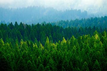 Burzliwy las w górach Chmury i mgła Pogoda