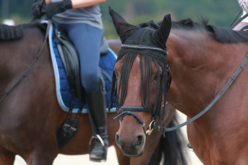 Horse in the riding arena with rider in close-up, head, stirrup, boots spurs..