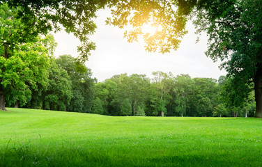 Fresh air and beautiful natural landscape of meadow with green tree  in the sunny day for summer background, Beautiful lanscape of grass field with forest trees and environment public park with sun ra