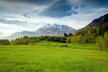 Green meadow in the Wasatch Mountains, Utah, USA.