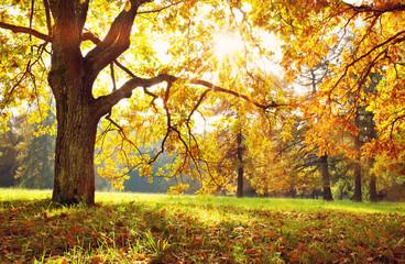 drzewa w parku jesienią w słoneczny dzień
