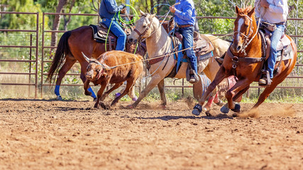 Australian Team Calf Roping At Country Rodeo