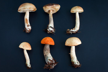 top view flat lay mushrooms pattern on a black background