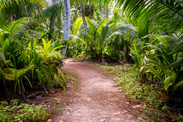 Ground rural road in the middle of tropical jungle.