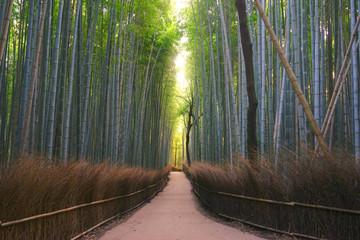 bamboo forest, Arashiyama, Kyoto Pref., Japan