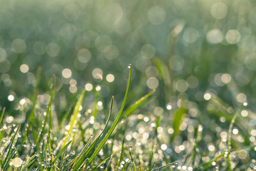 Art of nature: grass with  bokeh
