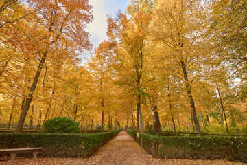 Trees with brown leaves in the garden of the Parterre in autumn