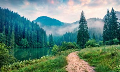 Mglista poranna scena jeziora Lacu Rosu. Mgłowy lato wschód słońca w Harghita okręgu administracyjnym, Rumunia, Europa. Piękno natury pojęcia tło.