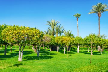 Piękne parki i ogrody w Marrakeszu. Maroko. Palmy i drzewa pomarańczowe. Osobliwości miasta.