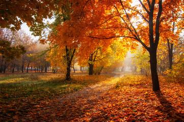 kolorowe drzewa i wiejska droga w głębokim lesie jesienią, naturalne tło
