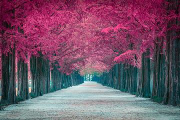 Różowy drzewny tunel wewnątrz w Korea Południowa