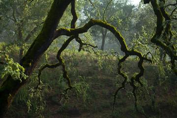 Sierra de Aracena Natural Park, Huelva, Andalucia, Spain, Europe