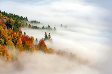 Jesień las na halnym zboczu z mgłą